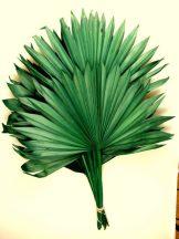 pálémalevél