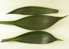 kókuszcsónak 15-25cm