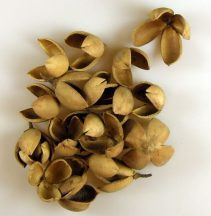 lili termés