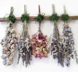 szárazvirágok, termések